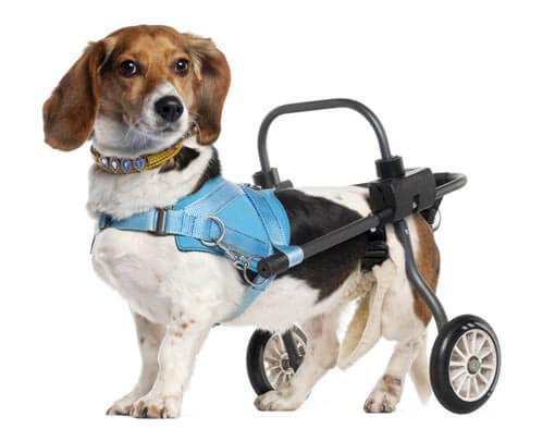 Headerbild Hunde-OP-Versicherung