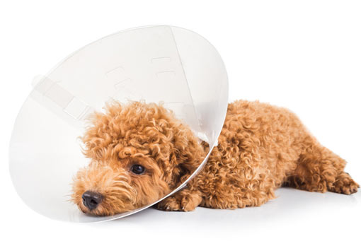Headerbild Hundekrankenversicherung