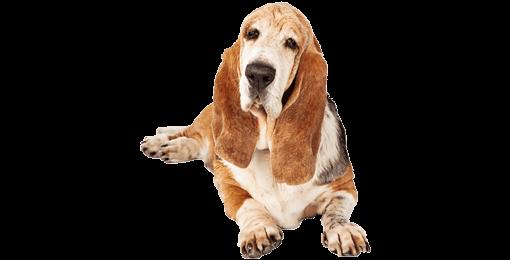 Hund mit Altersbeschwerden