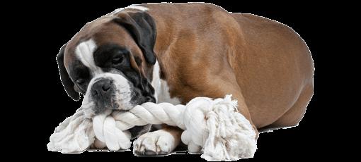 Hunde-OP-Versicherung Hund mit Zahnproblem
