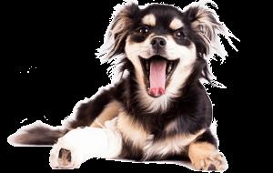Hunde-OP-Versicherung Unfall