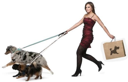 Hundehaftpflicht Symbolbild