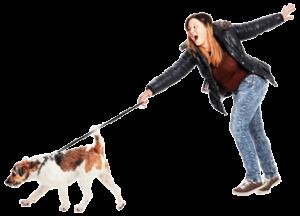 Welche Schäden sind bei der Hundehaftpflicht gedeckt?