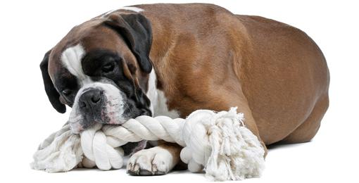Hund beisst in Seil