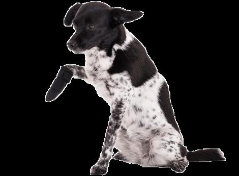 Hundekrankenversicherung Behandlungskosten