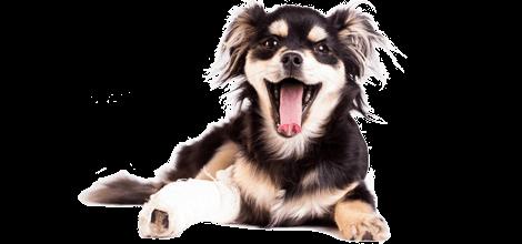 Hund mit Beinbruch