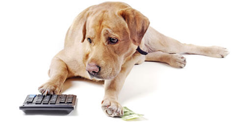 Hund mit Taschenrechner